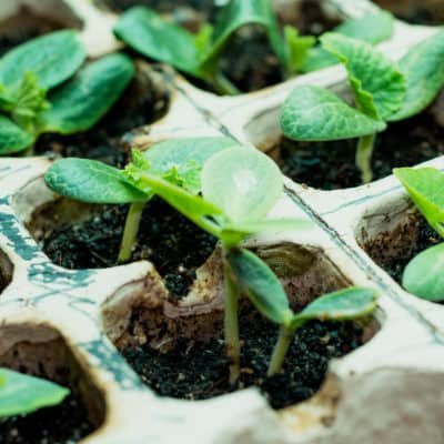 Growing vegetables from seeds & gardening tips