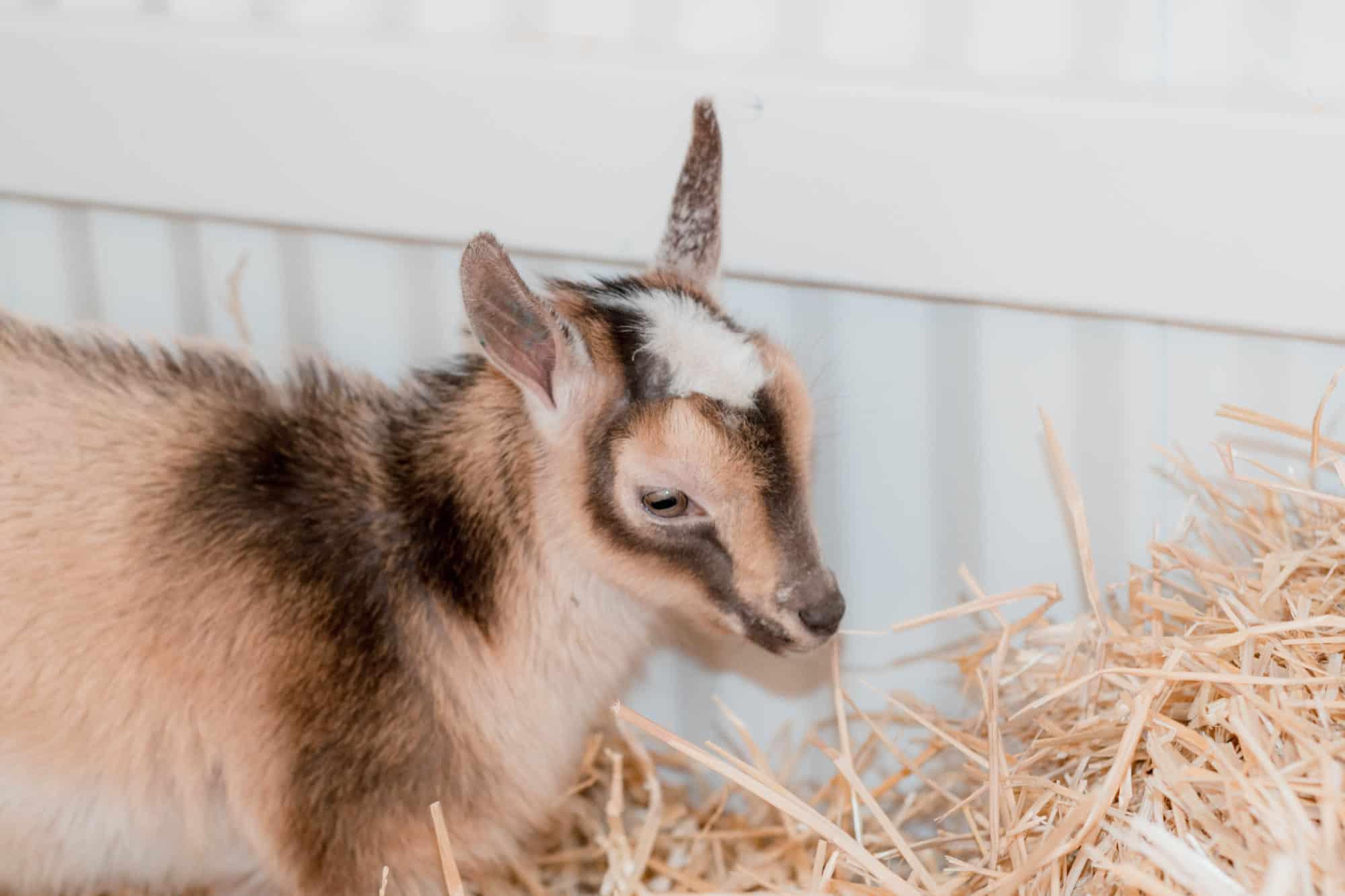 the Frenchie Farm modern homesteading blog