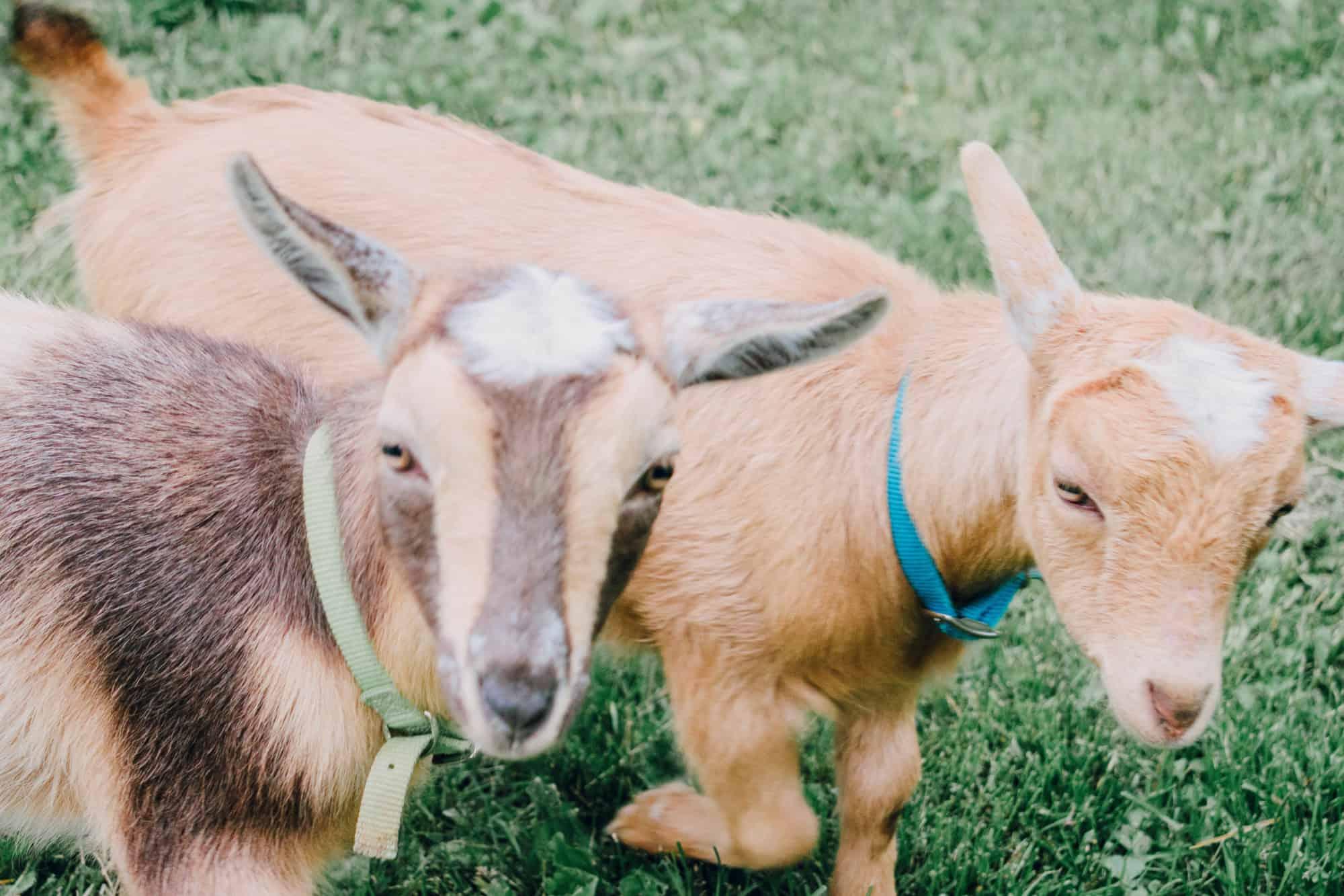 why we homestead homestead blog