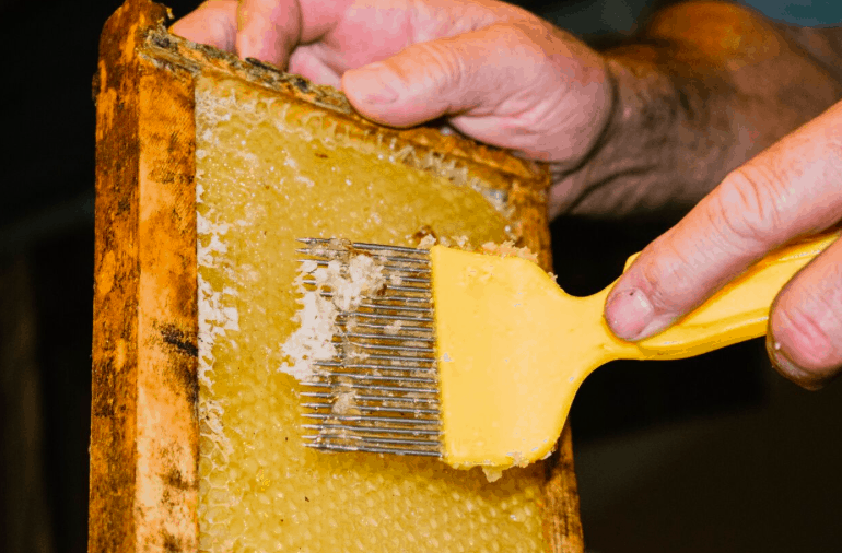 how to harvest and extract honey