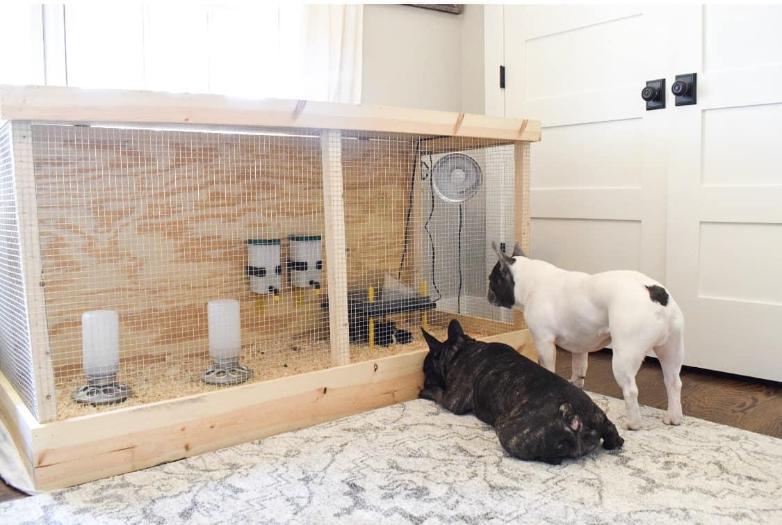 Frenchie Farm DIY chick brooder box ideas