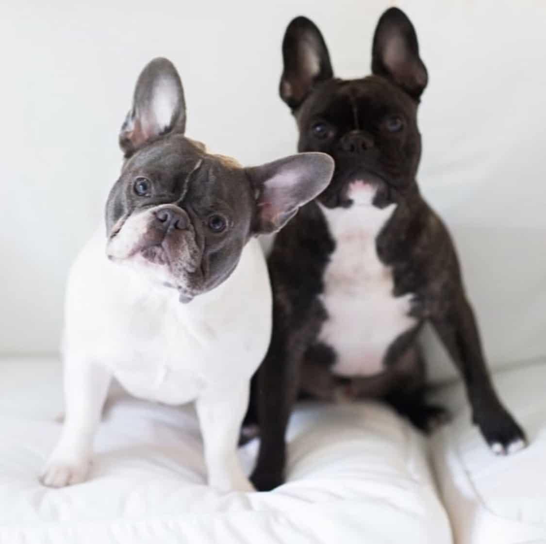 Henry & Marvin