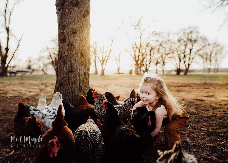 Frenchie Farm Red Maple Photography