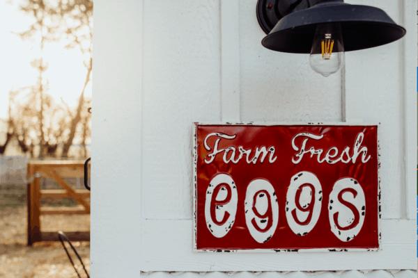 Frenchie Farm