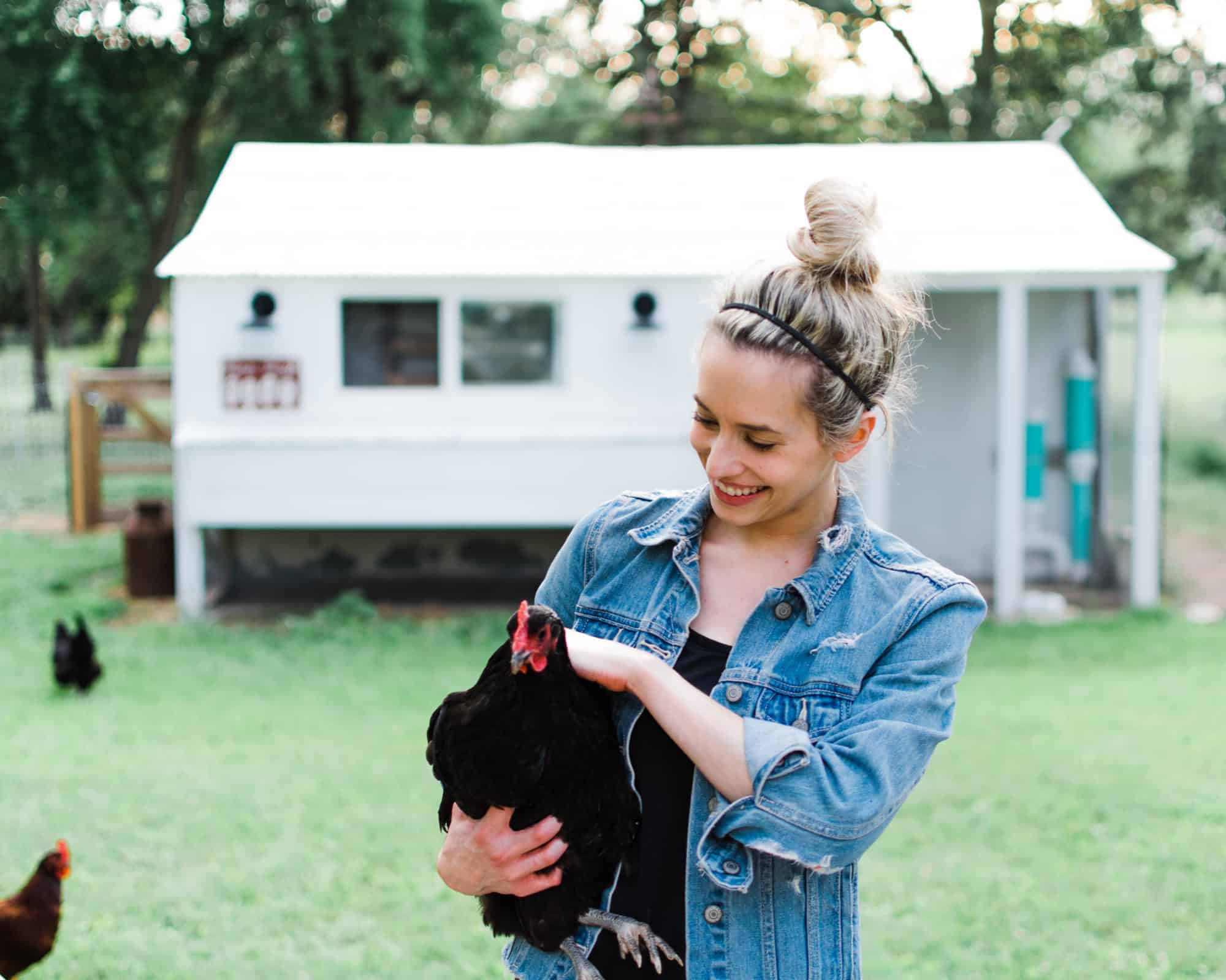 Frenchie Farm how to choose a chicken breed