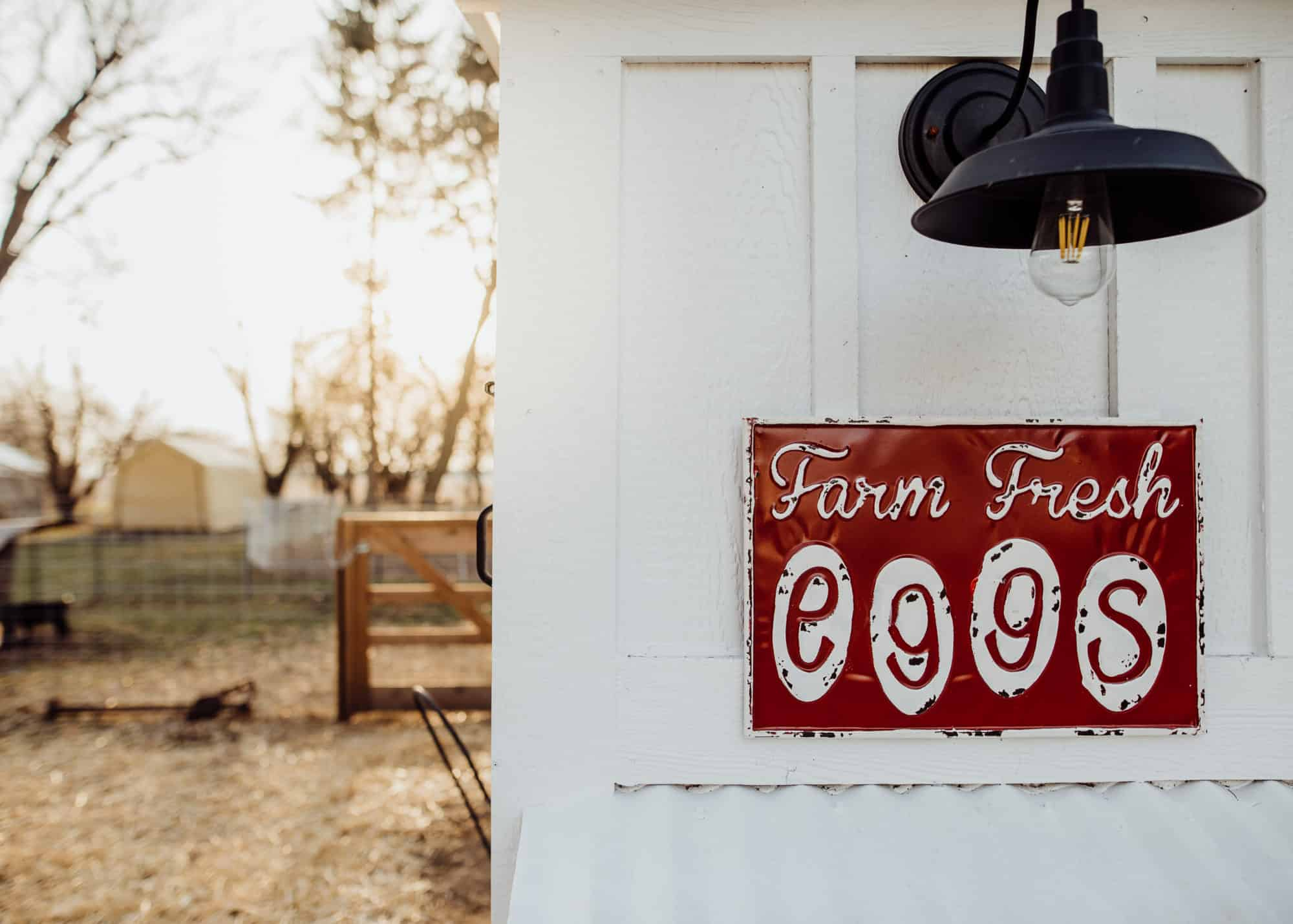 Frenchie Farm Homesteading shortcuts to make raising chickens easier