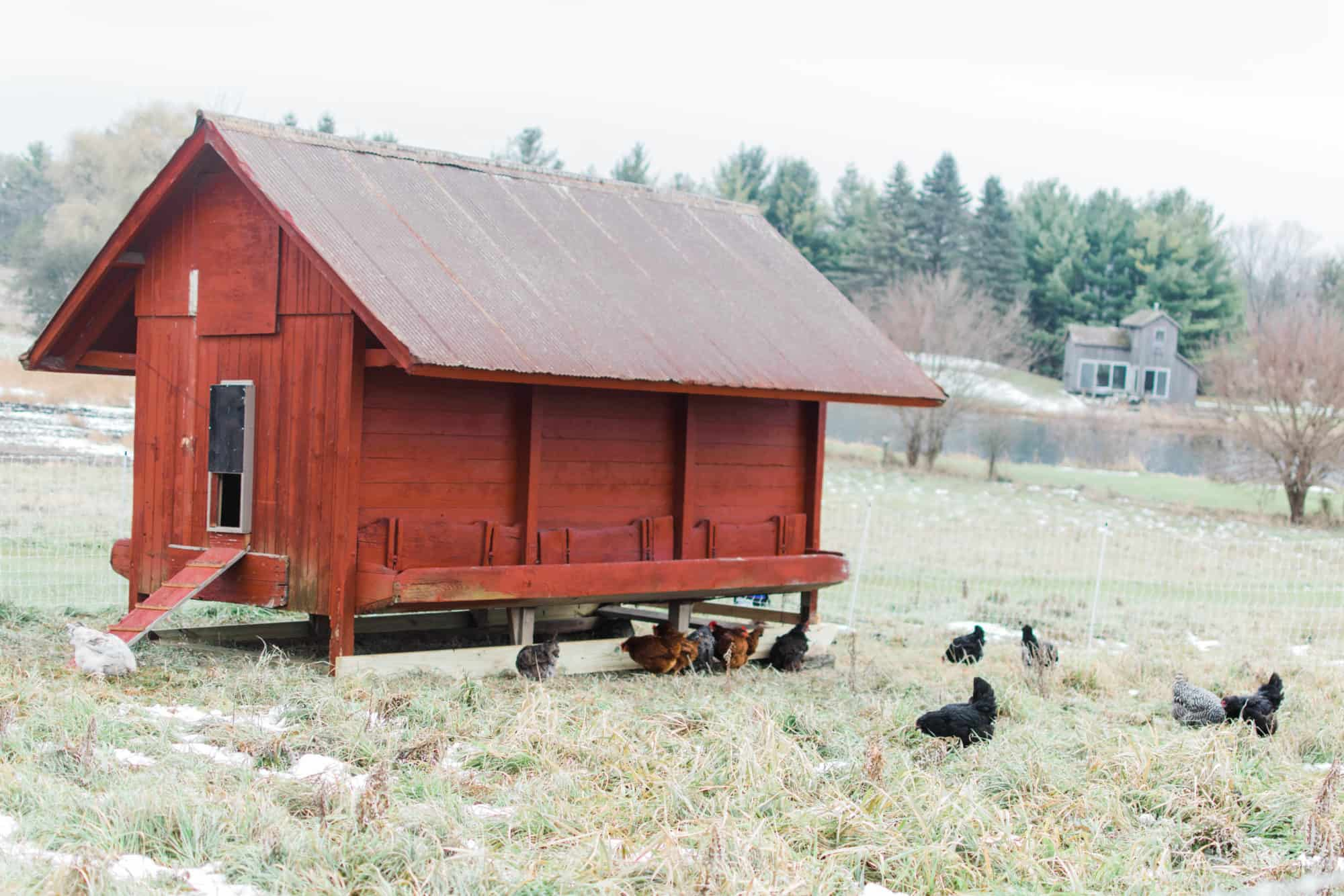 Frenchie Farm homesteading for beginners tips for starting a homestead