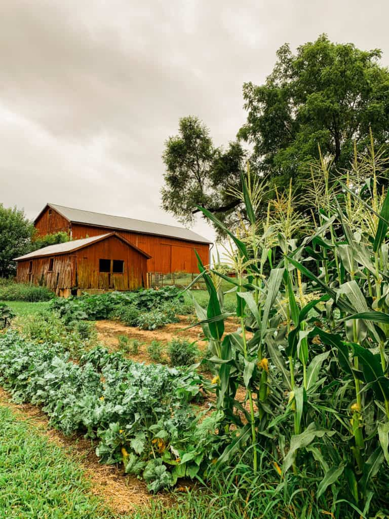 Frenchie Farm best gardening tools & preserving food at home